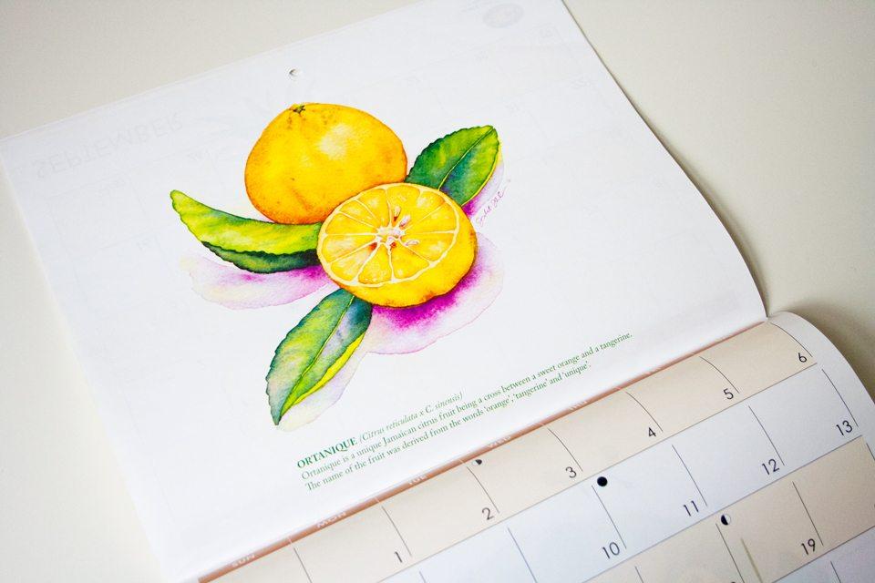 Fruits of Jamaica Calendar by Juliet Thorburn